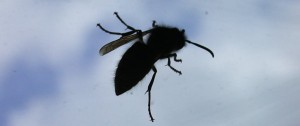 Critter of the Day: a wasp on the window