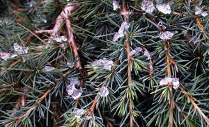 treeiceDSCN4552
