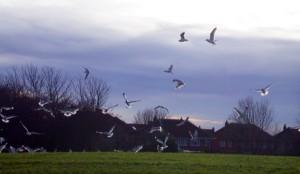 gullsDSCN4582