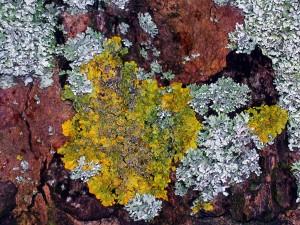 lichensDSCN4759