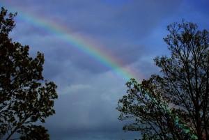 rainbowDSCN4980
