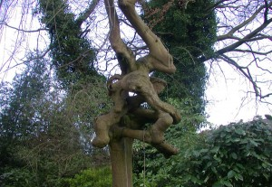 treeskneesDSCN4968
