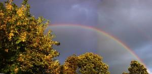 rainbowDSCN5489