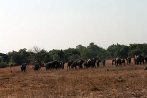 elephantsC7DL3363