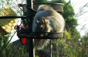 squirrelIMG_0677
