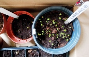 seedlingsIMG_20200412