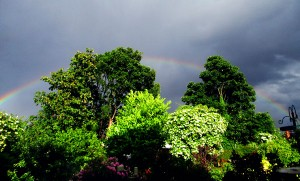 rainbowIMG_0657