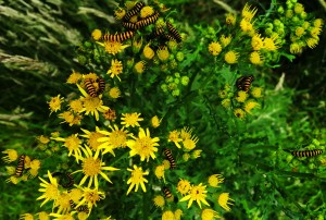 caterpillarsIMG_20200701