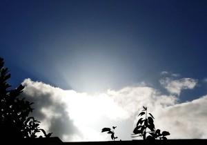 sunshineIMG_20200909